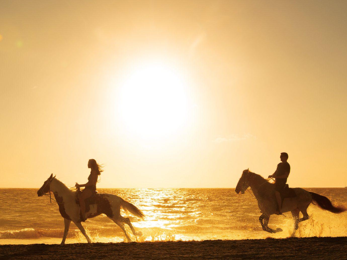 Hotels sky outdoor water mammal mustang horse morning Camel Sunset landscape evening horse like mammal Desert sahara