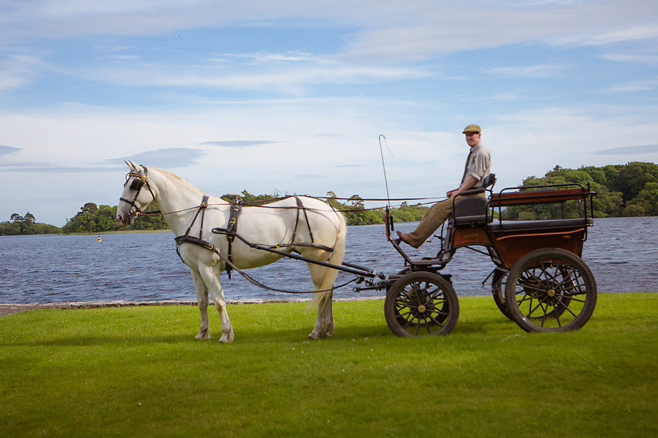 Hotels grass sky outdoor horse and buggy horse horse harness carriage vehicle transport horse-drawn vehicle cart rural area green horse like mammal landscape Farm agriculture pack animal pulling drawn pulled lush