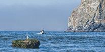 Trip Ideas water outdoor mountain Sea landform shore Coast Ocean rock cliff wave bay cape terrain aquatic mammal islet Island tower arctic ice distance