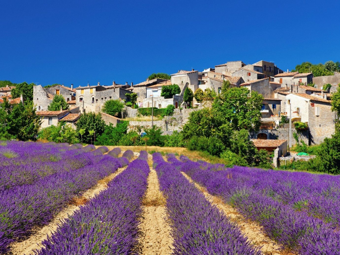 Travel Tips sky outdoor flower lavender plant field human settlement land plant agriculture rural area flowering plant english lavender meadow