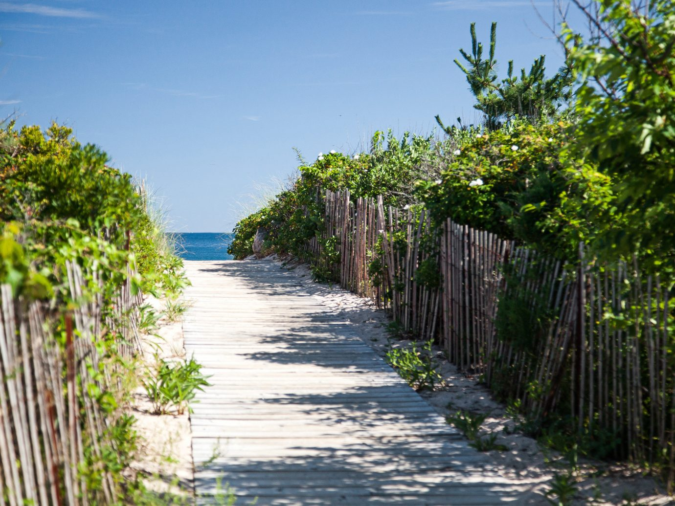 Beach Beachfront Nature Outdoors tree outdoor habitat walkway body of water River arecales waterway path plant bushes flower Garden surrounded lined