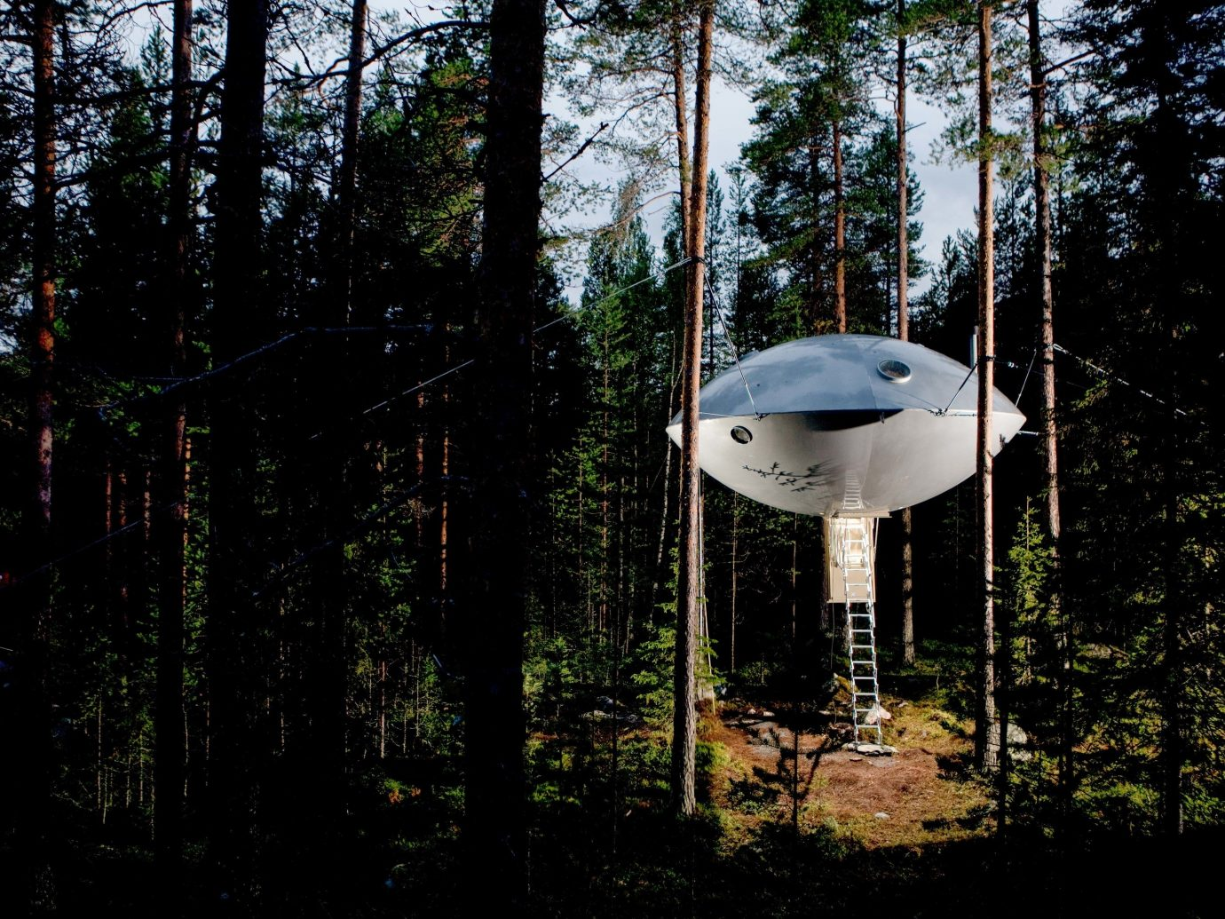 Boutique Hotels Sweden tree plant Forest outdoor structure house