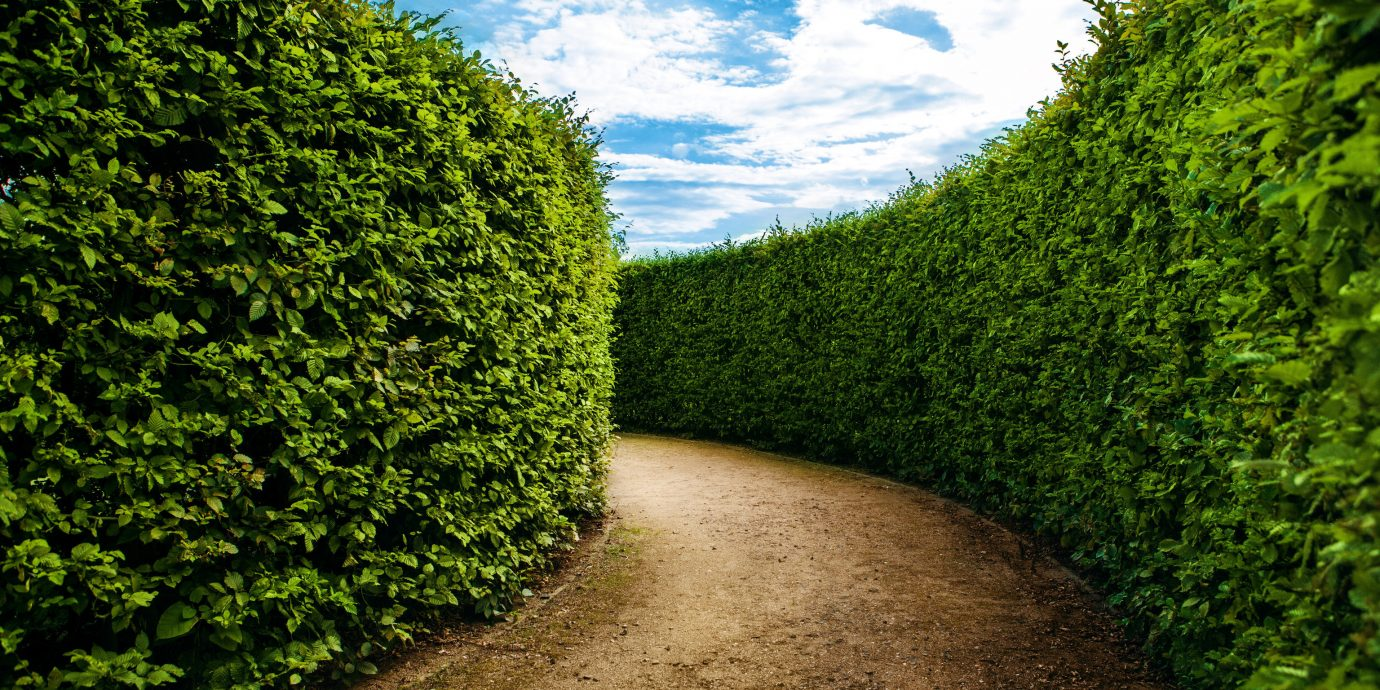 Trip Ideas tree outdoor ground green Nature grass plant Garden field leaf lawn soil woody plant Forest hedge path sunlight rural area shrub plantation woodland flower meadow autumn dirt bushes stone