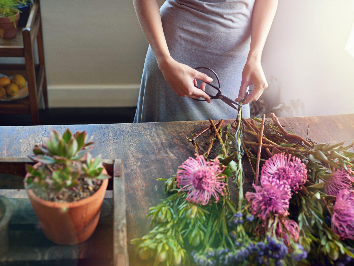 Offbeat person flower arranging woman plant floristry flower botany floral design land plant Garden flowering plant