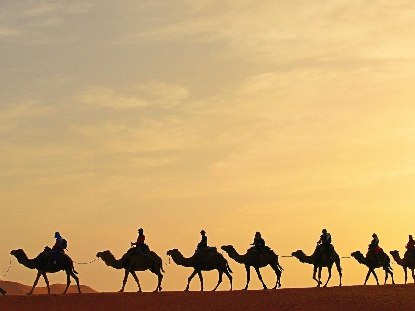 Hotels outdoor Camel natural environment people group Desert sahara camel like mammal landscape plain mustang horse steppe aeolian landform savanna prairie camel racing line horse