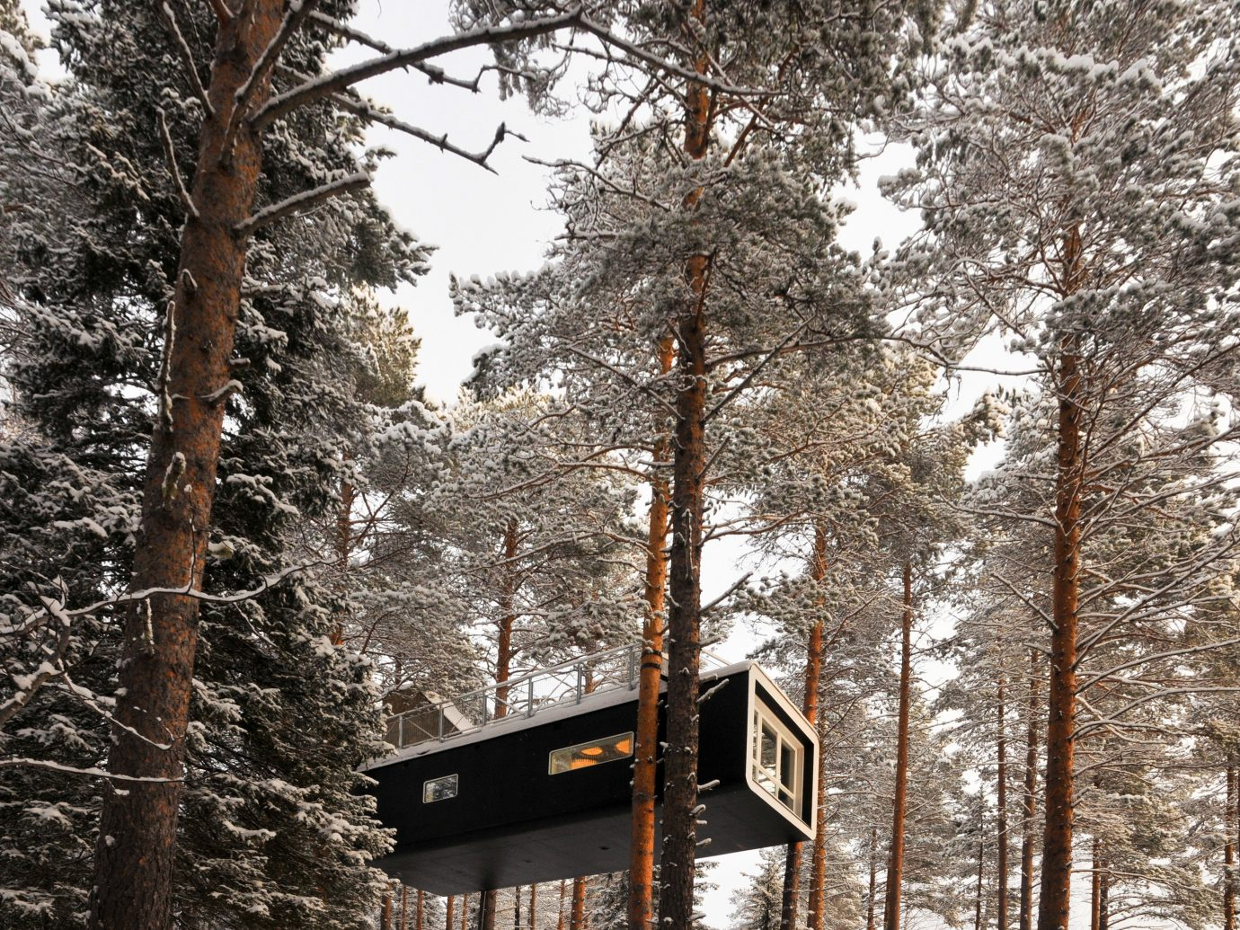 Design Hotels tree outdoor snow Winter weather season Forest conifer woody plant plant log cabin wooded wood
