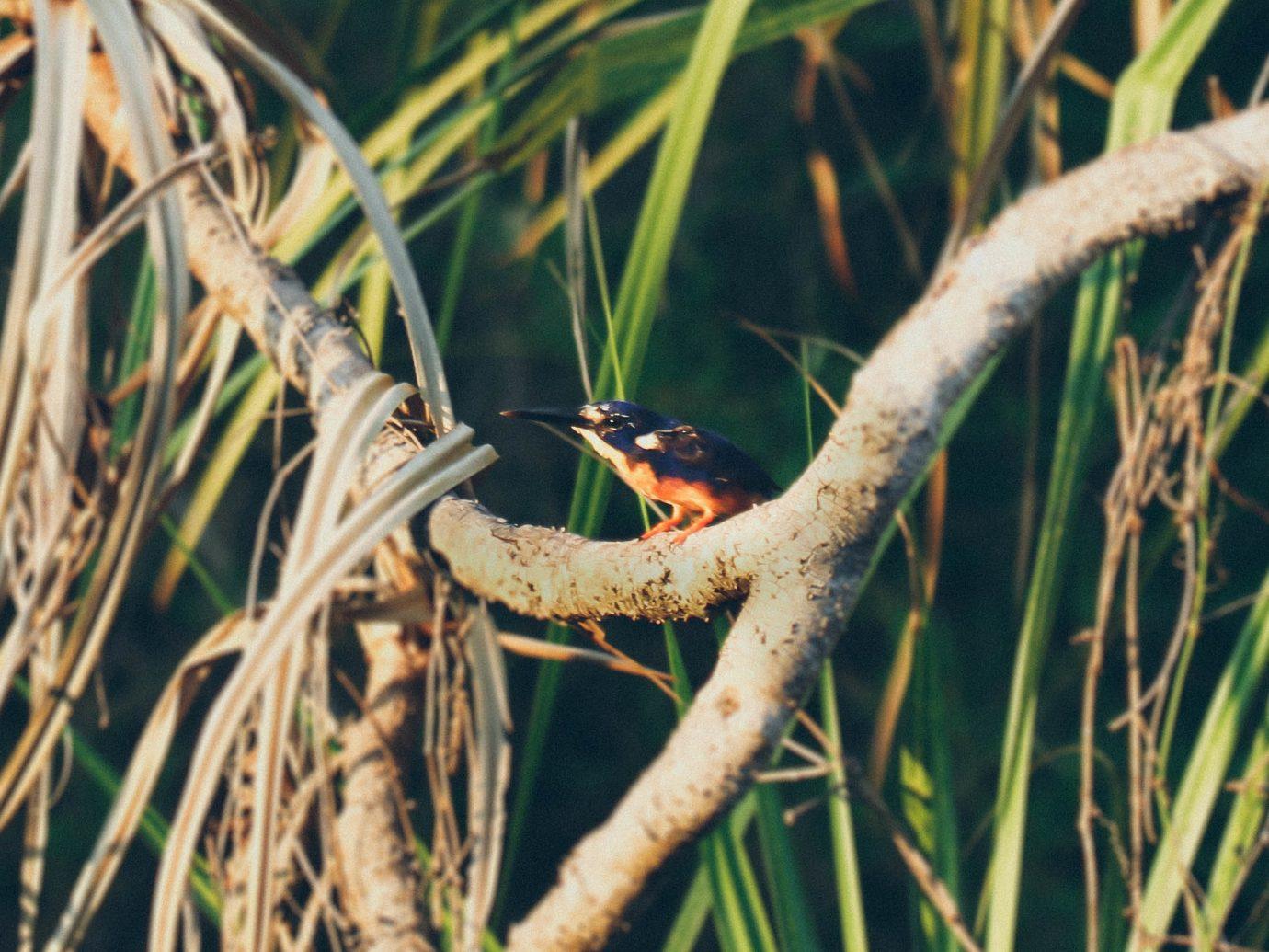 Trip Ideas tree outdoor branch animal Nature Bird vertebrate Wildlife perched green fauna perching bird