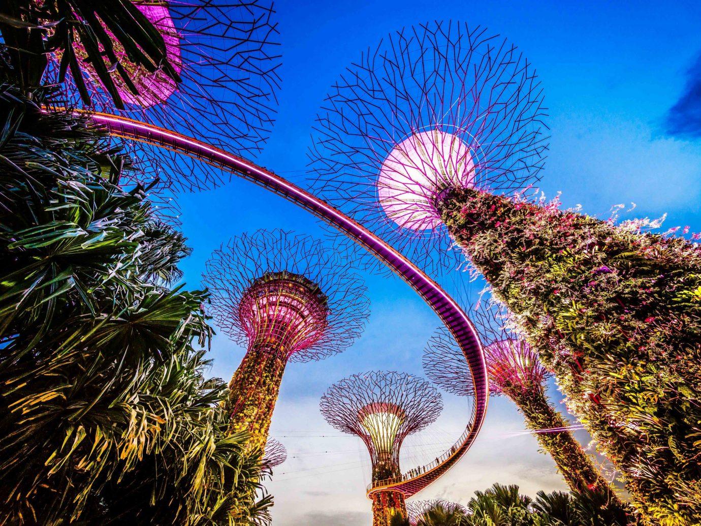 Offbeat Singapore Trip Ideas sky Nature woody plant tree tourist attraction palm tree arecales plant leaf amusement park computer wallpaper tourism world tropics festival date palm City