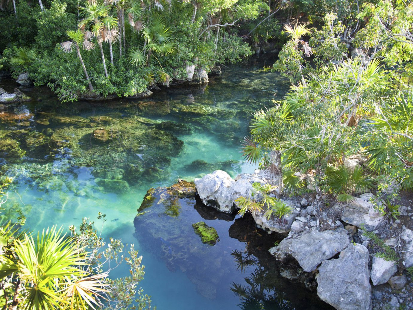 Trip Ideas tree outdoor vegetation Nature body of water watercourse ecosystem stream botany River pond flower water rapid Garden plant surrounded