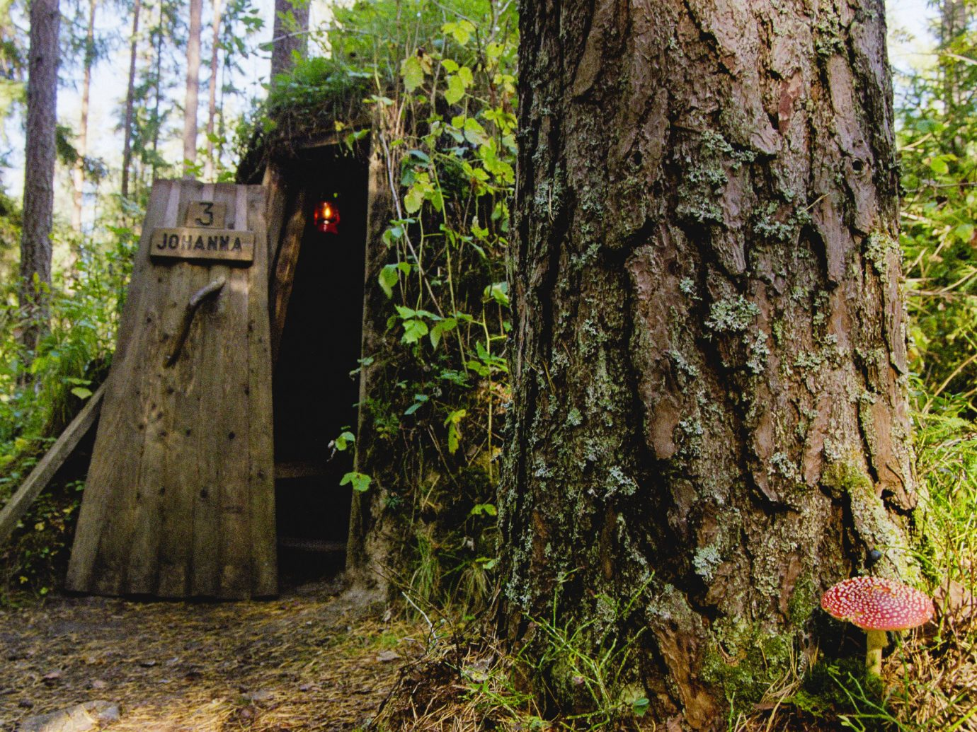 Boutique Hotels Sweden tree outdoor woody plant trunk plant woodland Forest old growth forest grove wood grass Jungle wooded