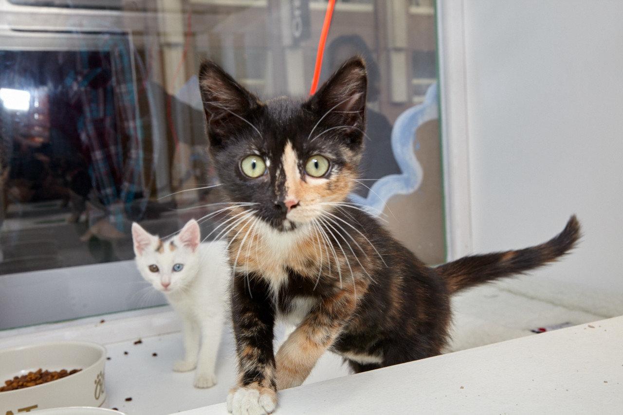 Trip Ideas cat sitting mammal vertebrate white whiskers small to medium sized cats cat like mammal kitten domestic cat