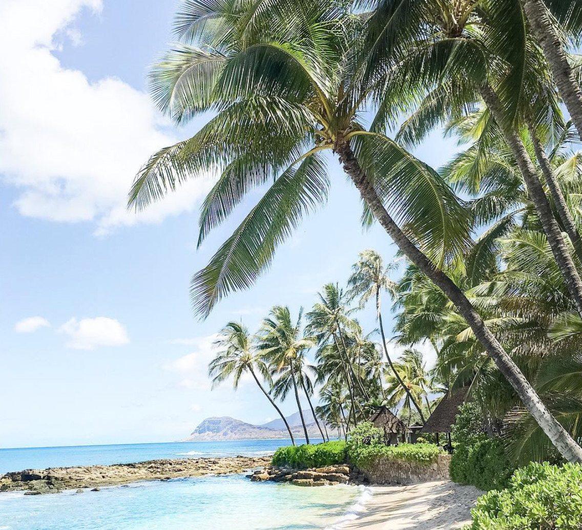 Hotels Romance Trip Ideas tree sky outdoor palm caribbean plant Beach vacation palm family tropics arecales woody plant Resort Coast Sea Jungle shore sandy