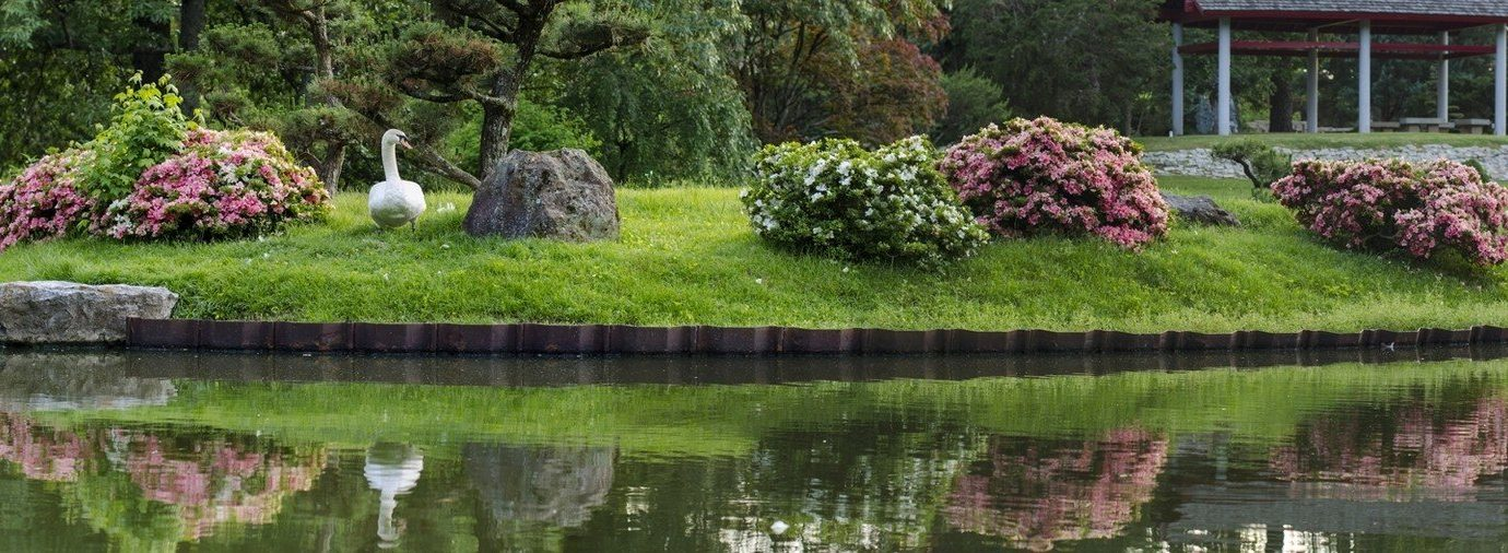 flowers Garden Greenery Nature Parks plants pond trees Trip Ideas grass water tree outdoor waterway flower Lake fish pond landscape architect estate Canal backyard botanical garden shrub surrounded
