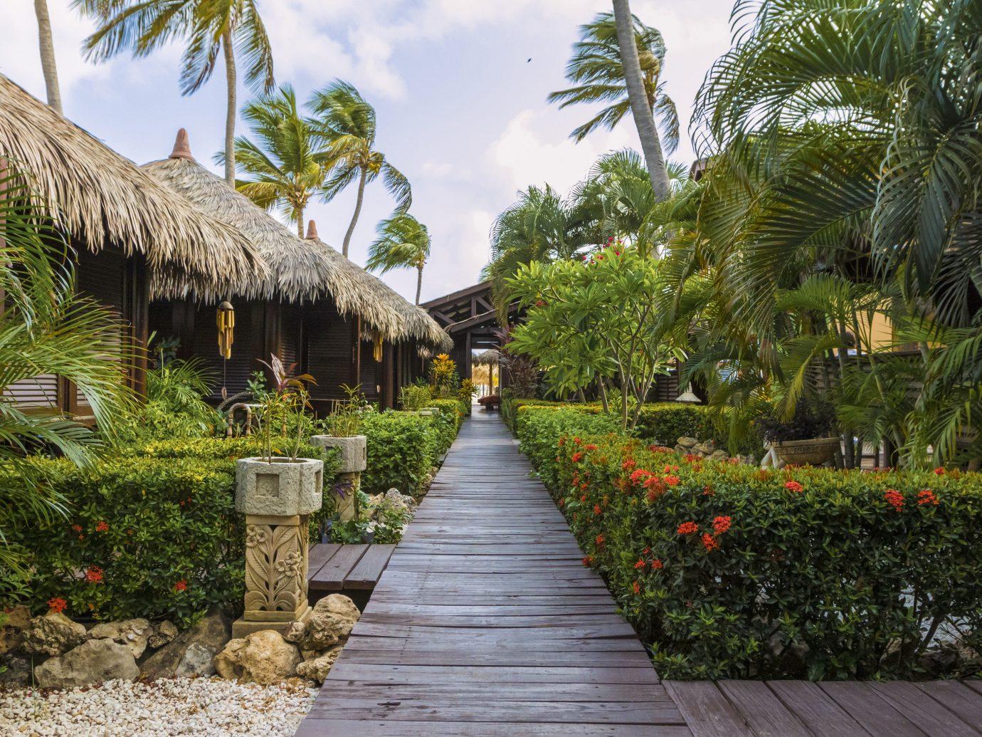 Aruba caribbean Hotels tree outdoor walkway botany Resort vacation Garden arecales flower plant estate botanical garden palm family tropics palm stone
