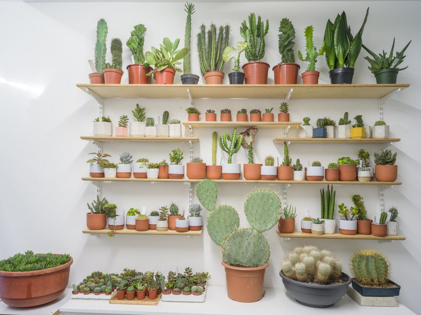 Offbeat Style + Design Travel Trends wall plant cactus flowerpot indoor houseplant counter flowering plant caryophyllales