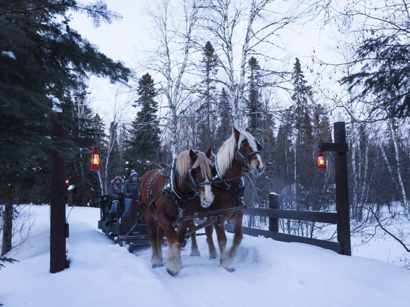 Romance Trip Ideas snow tree outdoor transport Winter sled weather season vehicle animal sports Forest wooded
