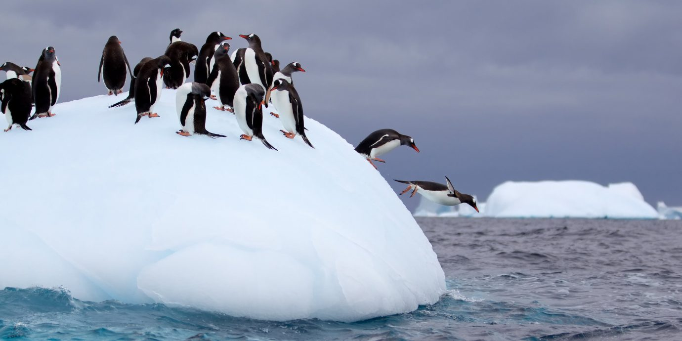 Adventure sky outdoor Bird sea ice iceberg flightless bird penguin water arctic ice Ocean Sea arctic ocean wave polar ice cap coastal and oceanic landforms ice cap seabird glacial landform