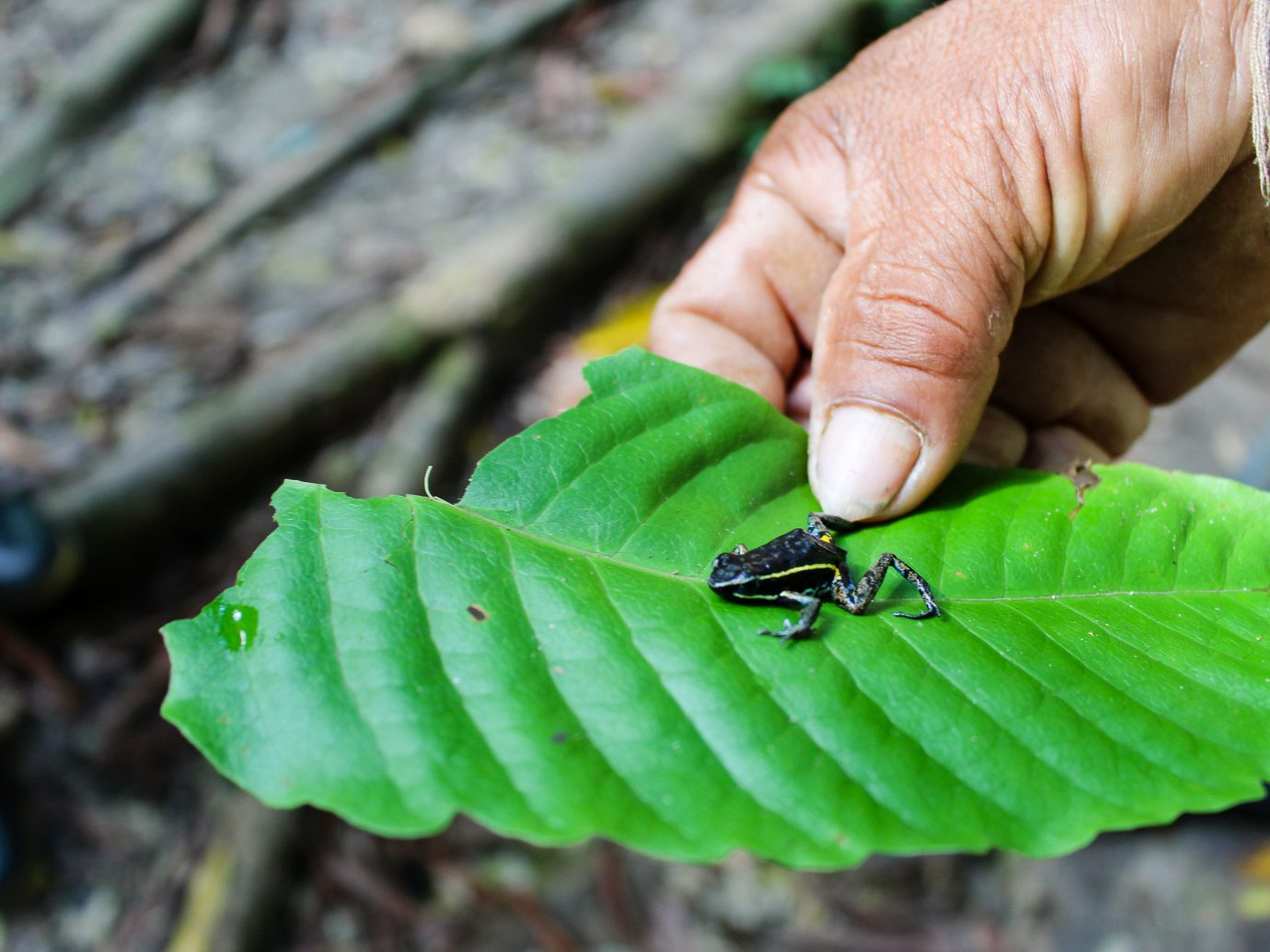Travel Tips person green leaf insect fauna hand organism plant macro photography invertebrate membrane winged insect pest larva tree
