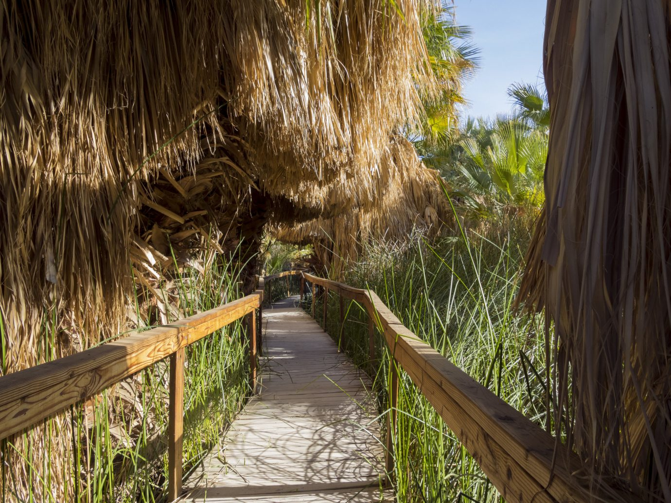 Trip Ideas outdoor tree vegetation plant path arecales wooden grass family willow wood grass Jungle palm tree Forest sky trail