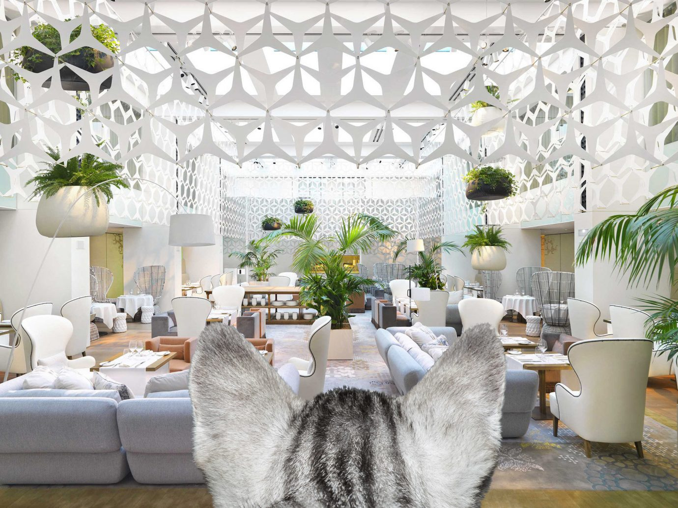 Hotels cat indoor white room window floristry living room interior design home Design textile