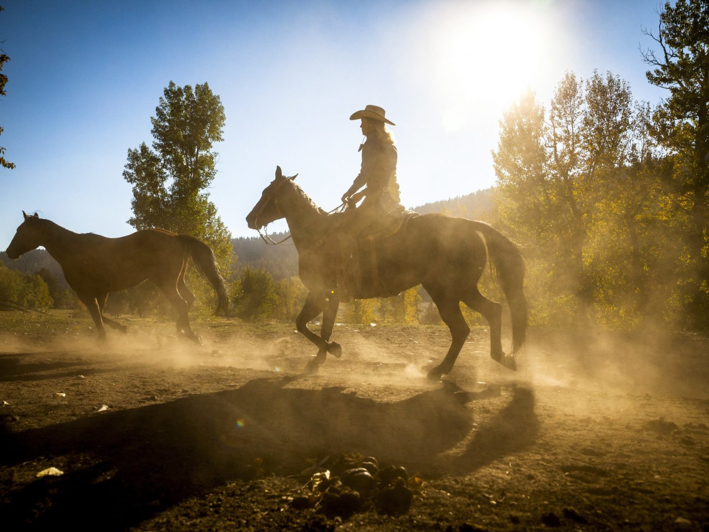 Trip Ideas tree sky outdoor horse Nature standing mustang horse Wildlife landscape mammal horse like mammal stallion