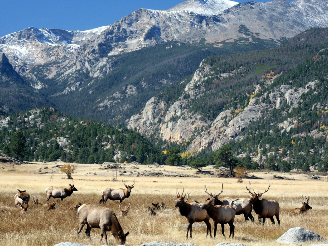 Forest Mountains National Parks Nature Road Trips Scenic views Trip Ideas Wildlife mountain outdoor sky mountainous landforms animal herd mammal wilderness pasture mountain range grazing cattle like mammal landscape plateau group cattle Adventure yak sheep