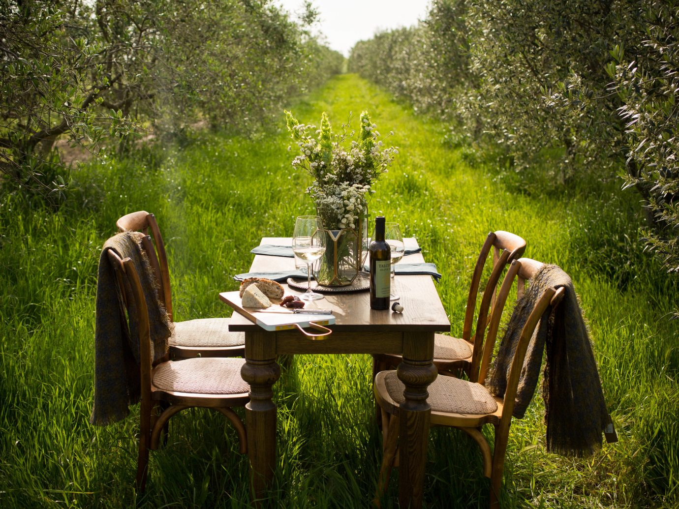 Food + Drink tree outdoor Nature green park botany woodland Garden backyard flower Forest plant autumn cottage wooded surrounded