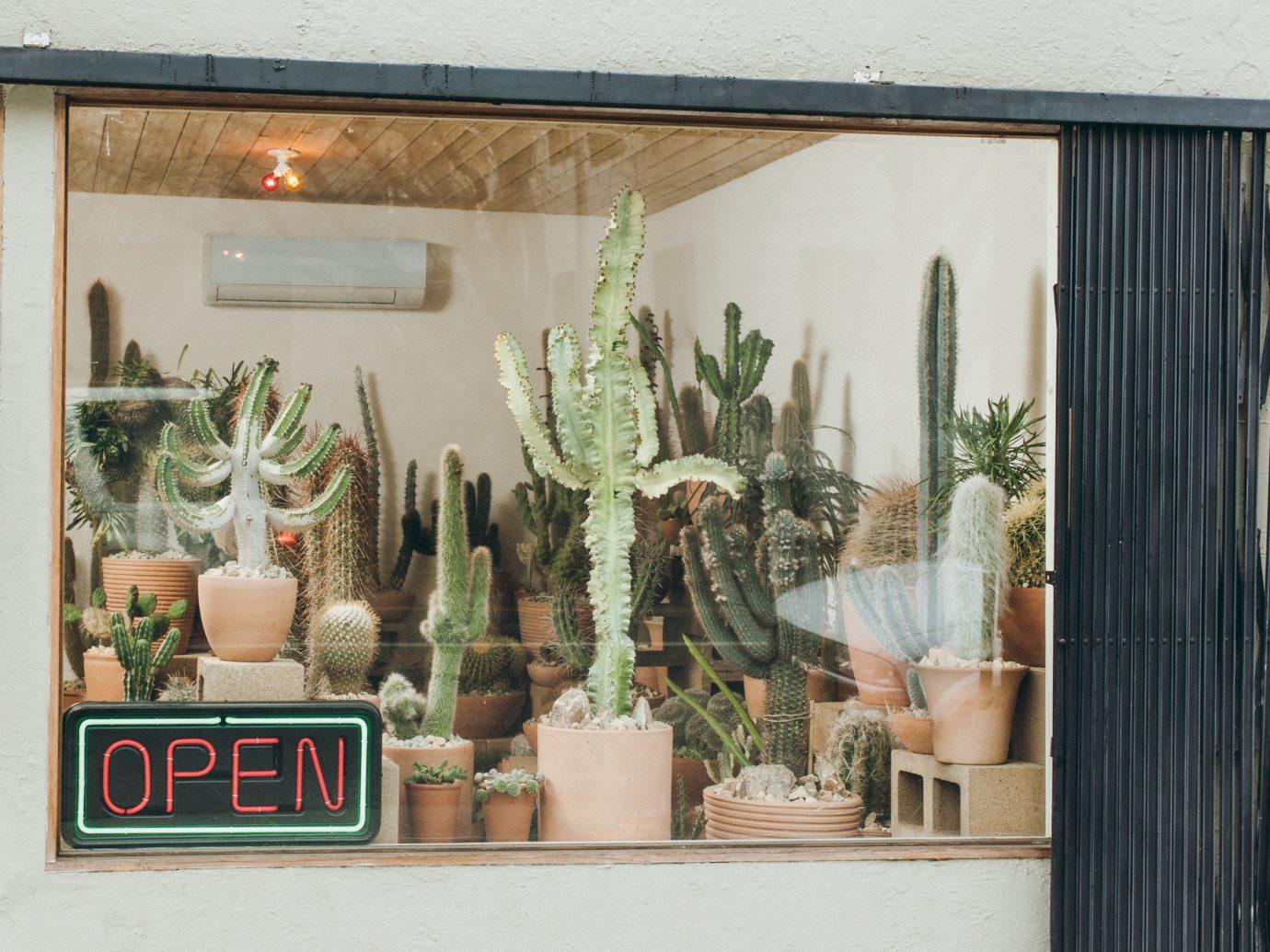 Offbeat Style + Design Travel Trends plant cactus flower floristry window floral design