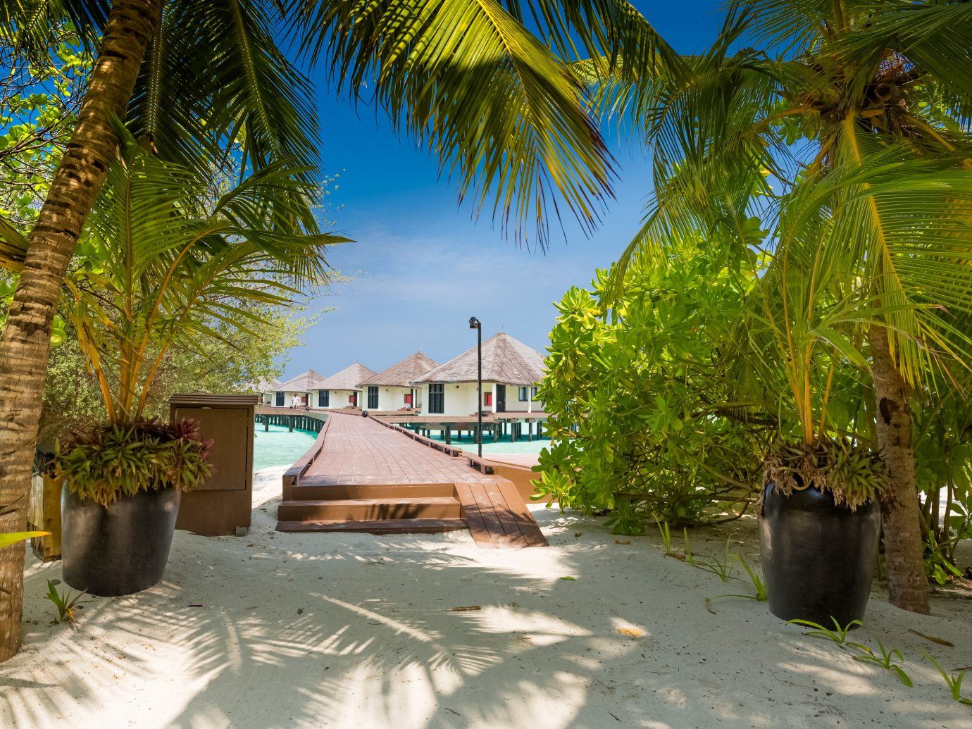 Hotels tree outdoor palm Resort vacation palm family tropics arecales Beach woody plant estate caribbean plant Jungle lined surrounded shade