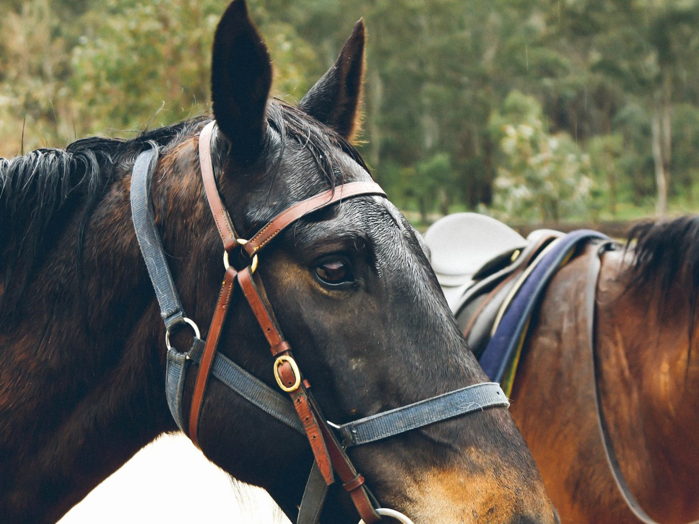 Trip Ideas horse outdoor horse harness halter brown animal bridle stallion mammal rein mare standing mane horse tack mustang horse equestrianism horse like mammal animal sports pack animal equestrian sport english riding sports tied
