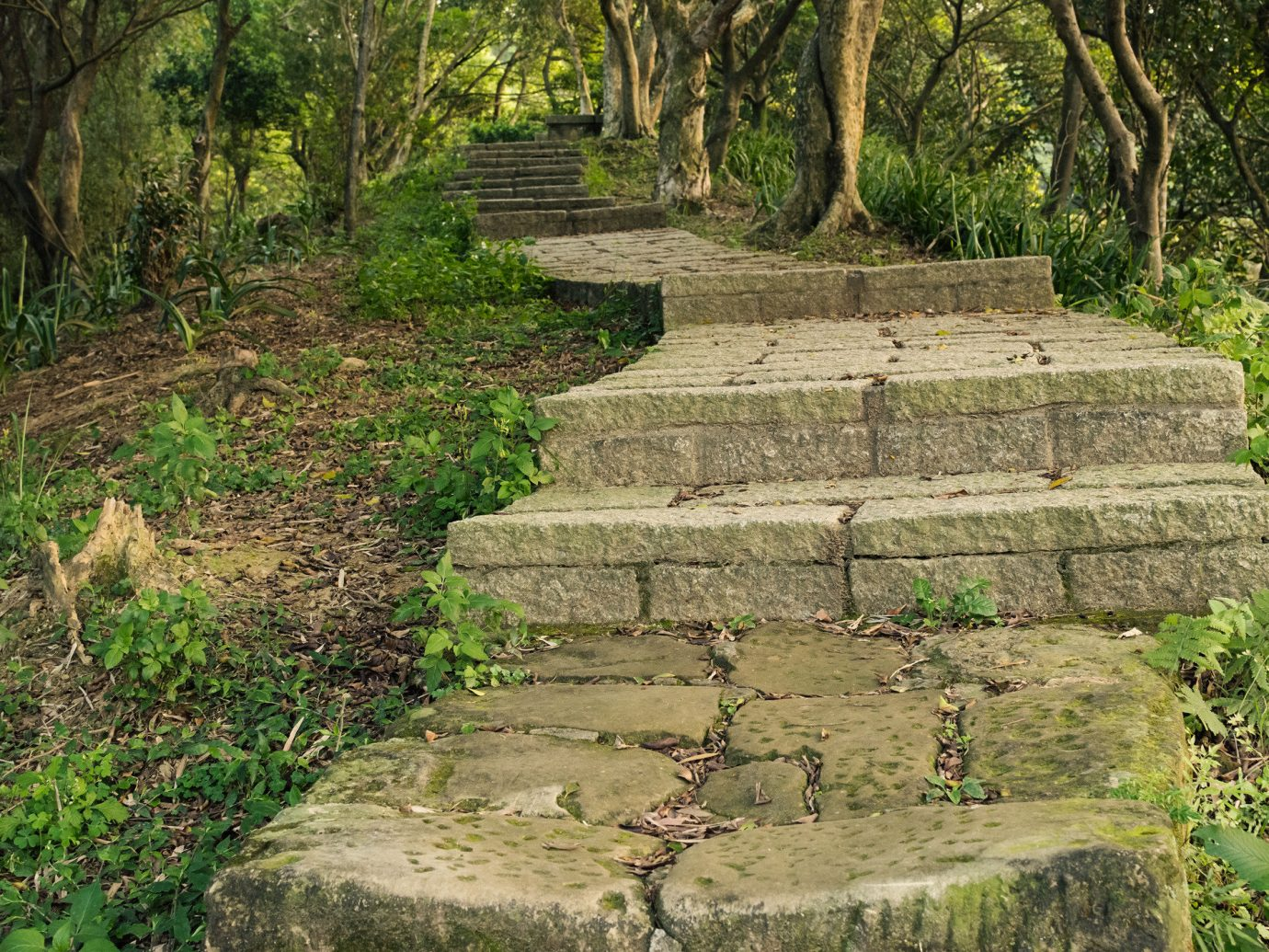Trip Ideas tree grass outdoor archaeological site wall botany Ruins rock park woodland Forest Garden green ancient history walkway stone wall Jungle plant surrounded stone lush
