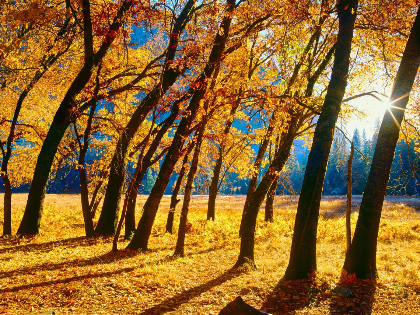 Offbeat tree outdoor grass habitat Nature plant natural environment season autumn sunlight leaf morning Forest woody plant woodland branch park evening Sunset area wooded