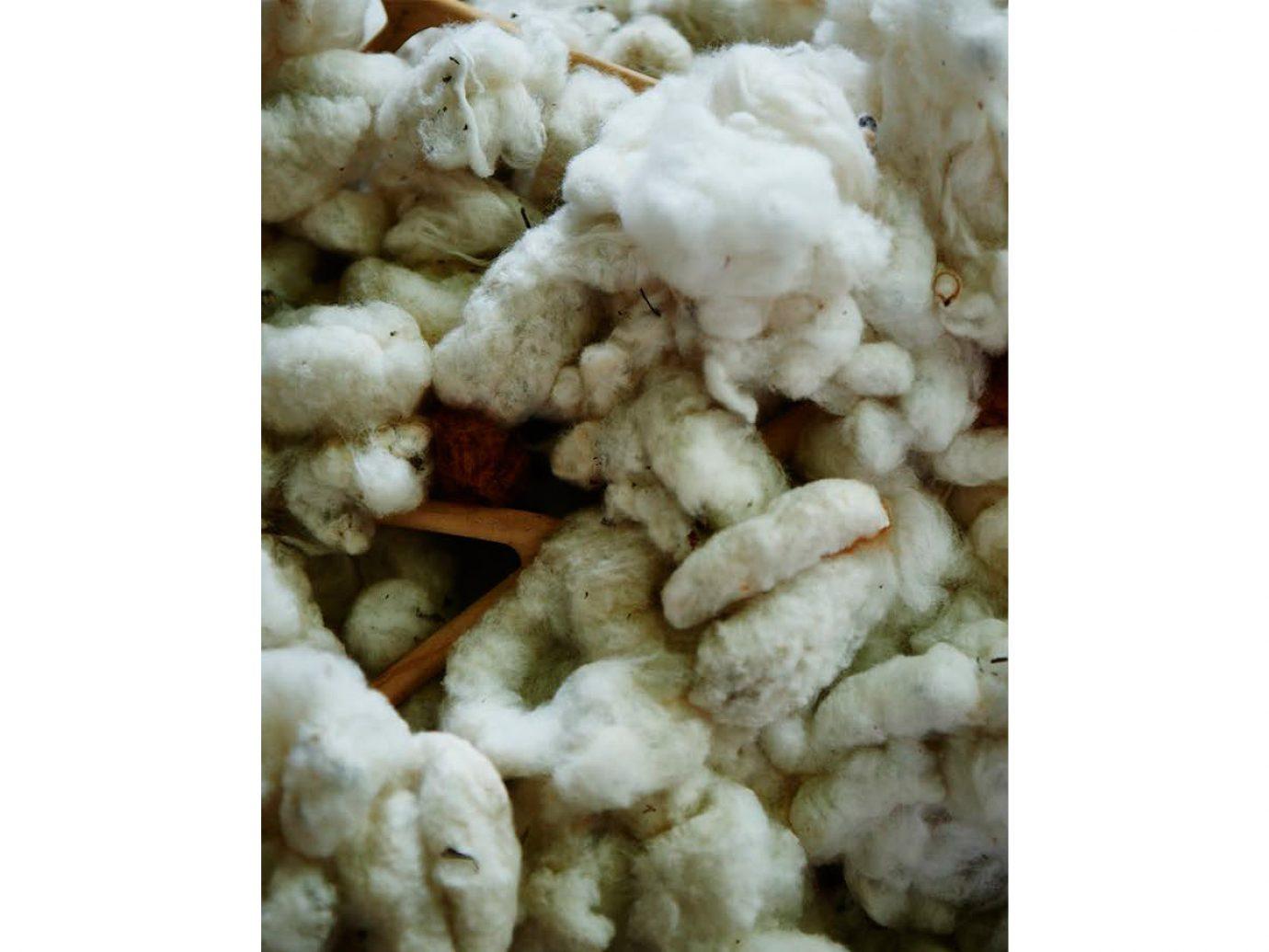 Trip Ideas food produce vegetable Seafood dish cruciferous vegetables cauliflower different