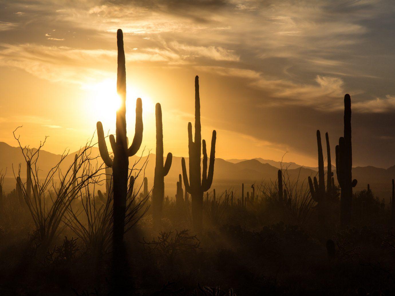 Trip Ideas sky outdoor Sunset plant Sun traffic cactus light Nature sunrise atmospheric phenomenon clouds cloud dawn horizon morning atmosphere setting evening sunlight dusk reflection cloudy mist day