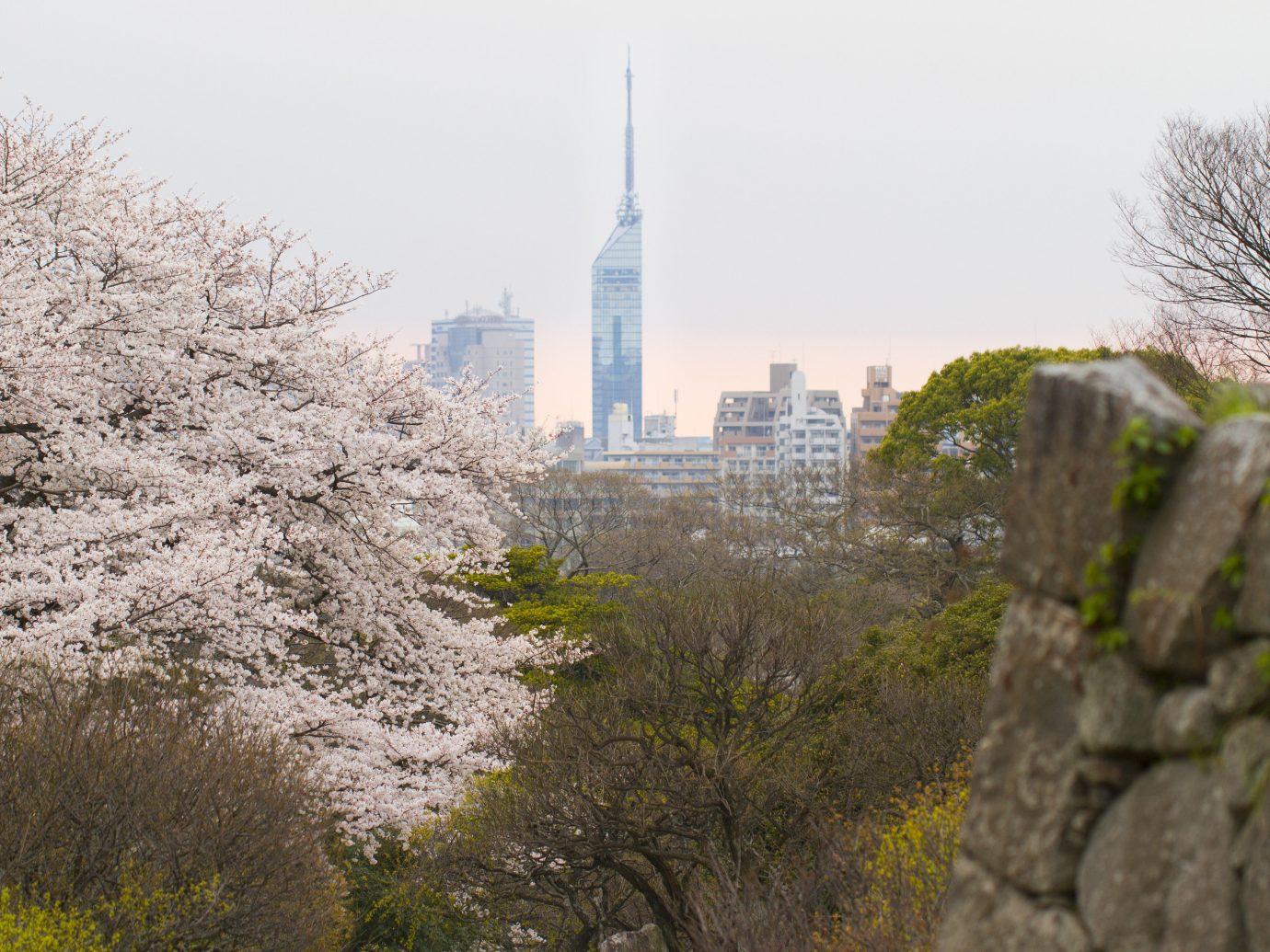 Japan Trip Ideas City plant urban area tree flower sky leaf cherry blossom skyline daytime spring skyscraper building metropolitan area Downtown landscape