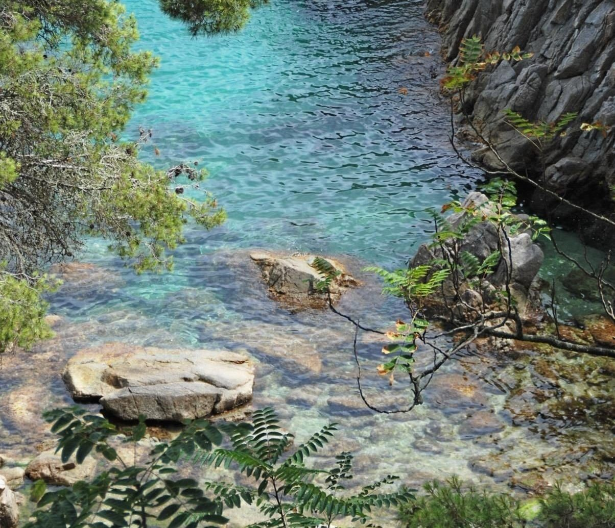 Offbeat outdoor tree rock wilderness body of water River ecosystem water stream Nature botany Forest woodland water feature rapid Jungle rainforest flower autumn hillside surrounded
