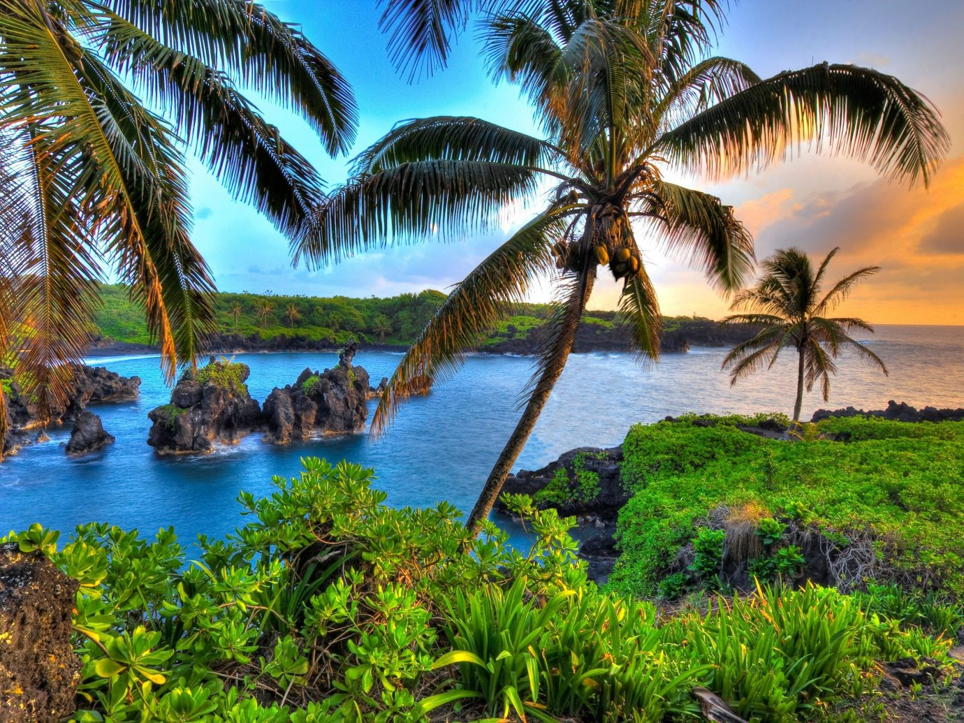 outdoor tree water palm grass habitat vegetation geographical feature body of water natural environment ecosystem Coast River Lake tropics plant Ocean shore arecales Sea Beach palm family woody plant Jungle landscape bay rainforest Lagoon savanna pond surrounded