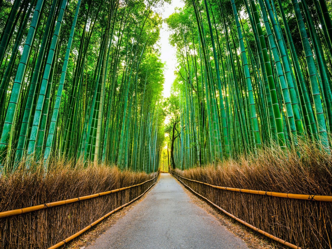 Trip Ideas habitat green Nature tree Forest natural environment plant light sunlight leaf woodland grass woody plant bamboo field branch rural area Jungle autumn grass family rainforest broom colored