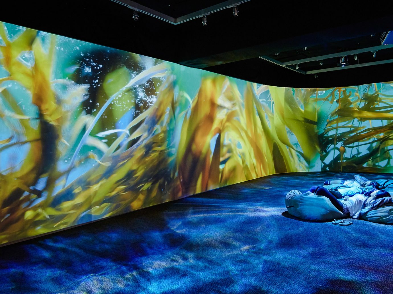 Trip Ideas marine biology aquarium freshwater aquarium underwater biology reef mural screenshot painting modern art display