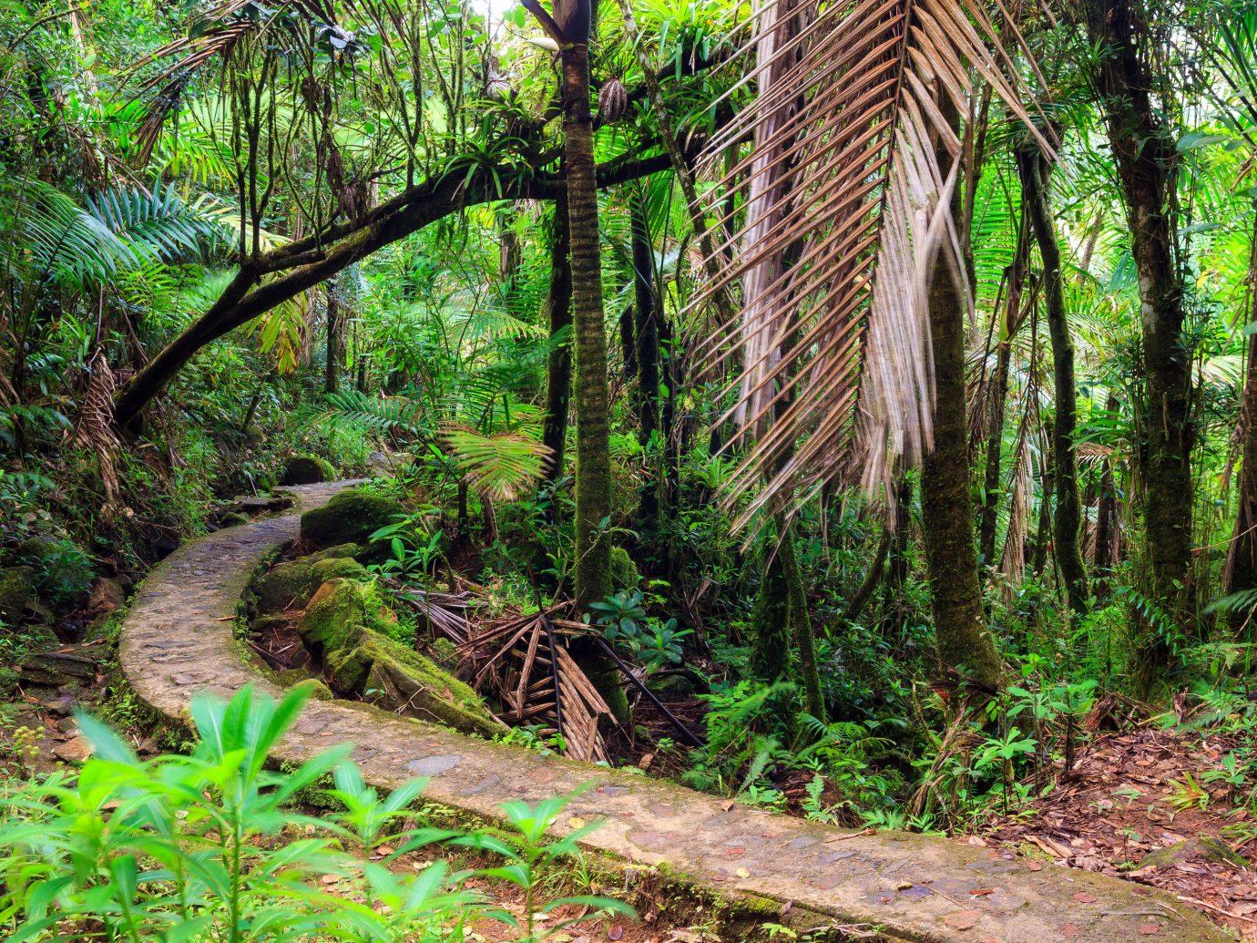 rainforest in San Juan, Puerto Rico