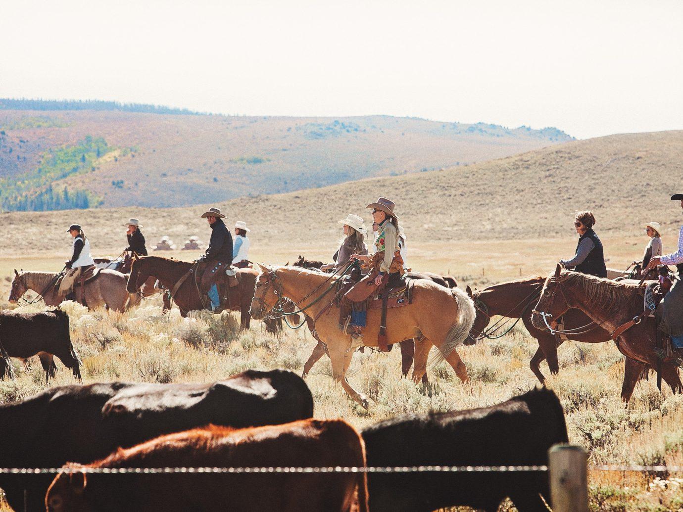Hotels Outdoors + Adventure Trip Ideas grass outdoor sky mammal mountain pack animal mustang horse herd landscape horse like mammal Ranch bovine