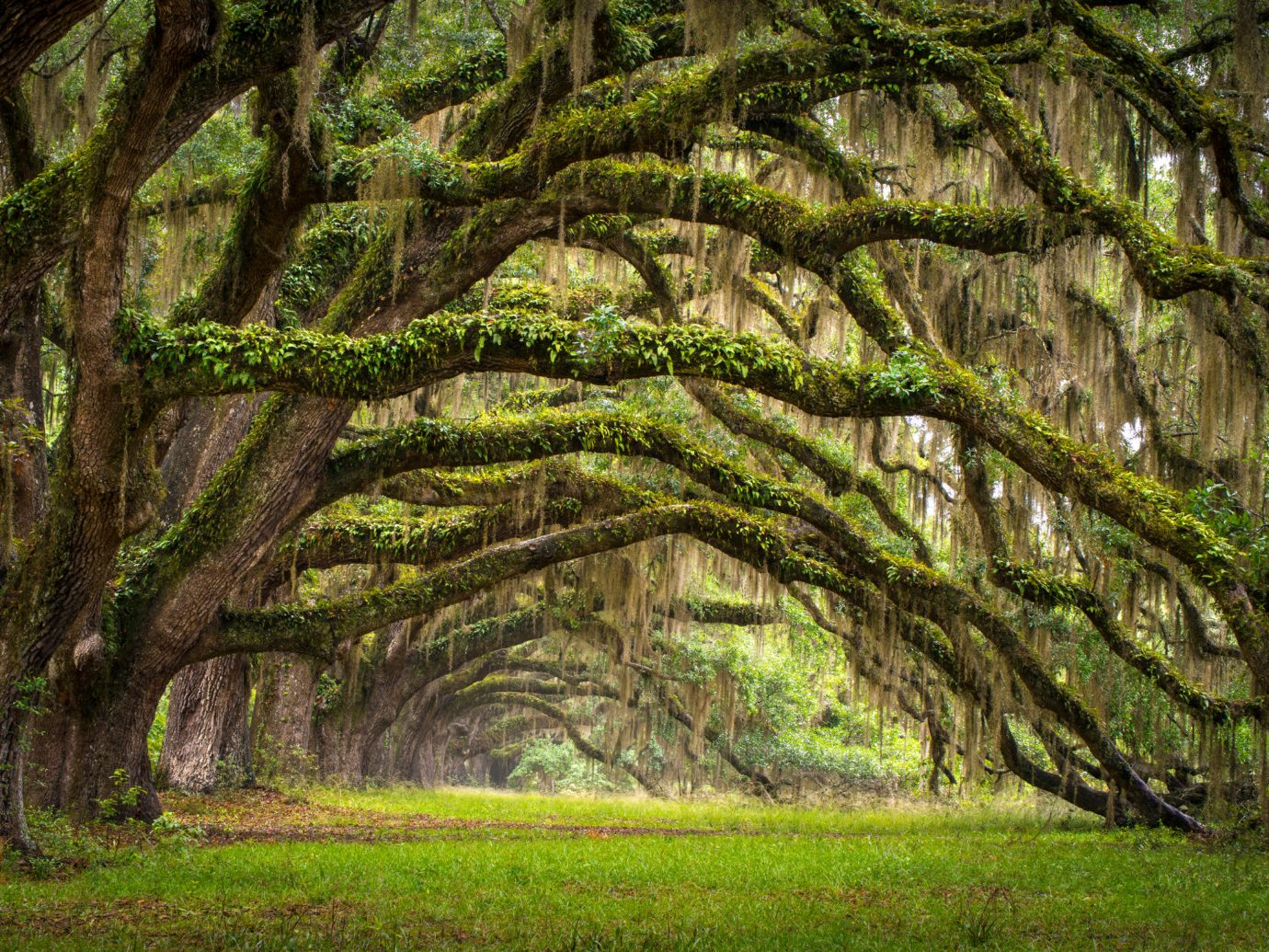 Exterior Forest Grounds Hotels Outdoors Trip Ideas Waterfront tree grass plant outdoor habitat green vegetation natural environment woodland ecosystem grove botany old growth forest branch woody plant park land plant trunk leaf deciduous plantation rainforest plant stem sunlight flower Jungle willow area lush wooded