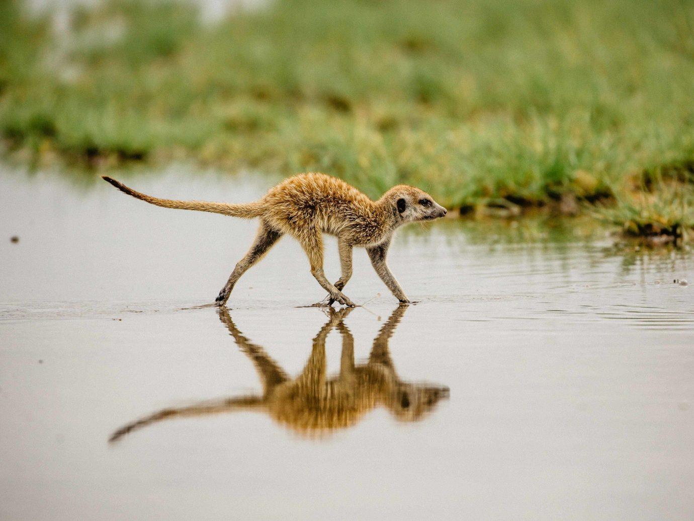 Outdoor Activities Safari Trip Ideas outdoor water Wildlife fauna animal terrestrial animal organism snout