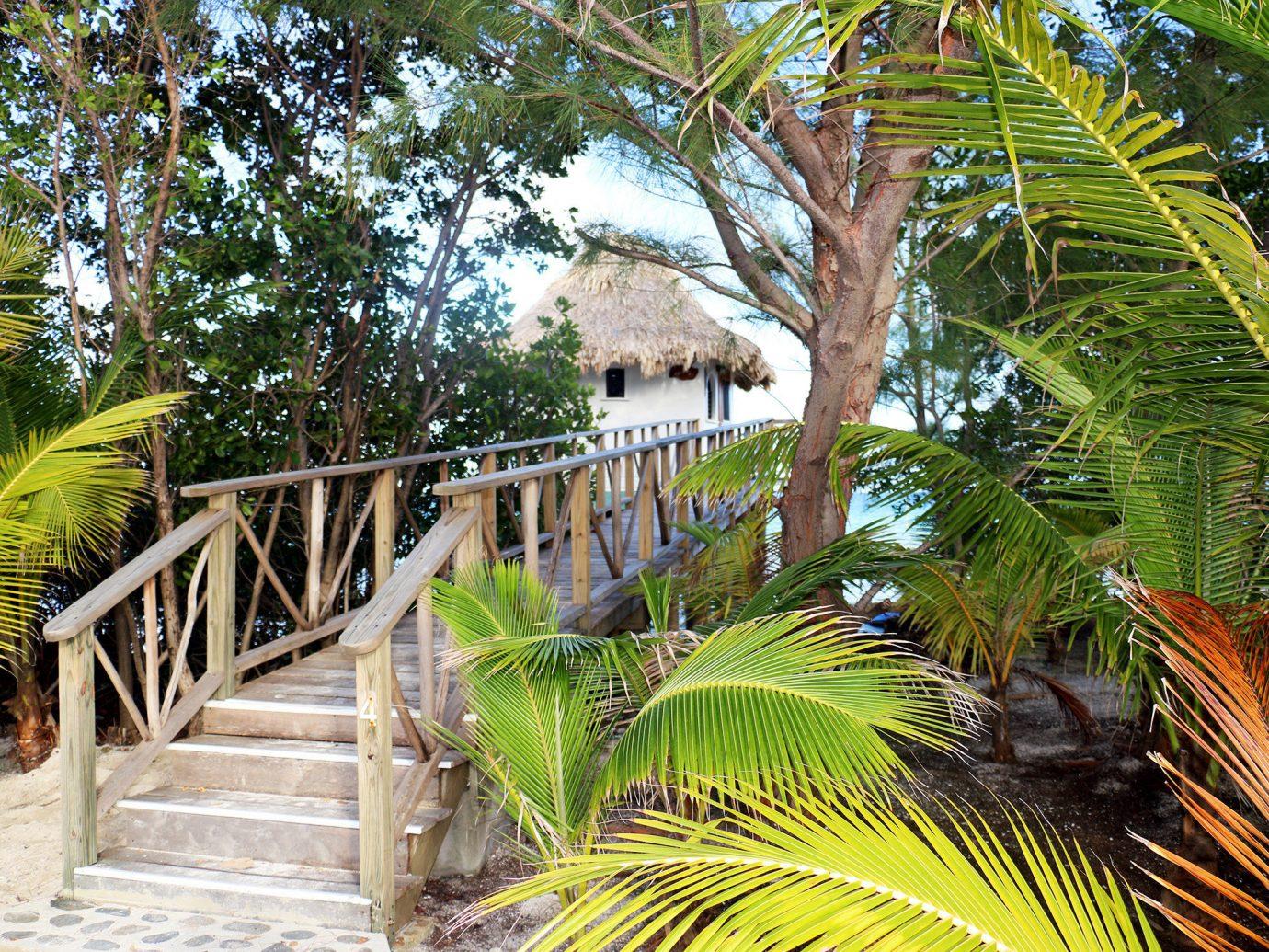 Eco Exterior Grounds Hotels Resort tree outdoor palm botany tropics rainforest Jungle arecales plant palm family vacation walkway estate Garden caribbean botanical garden area shade
