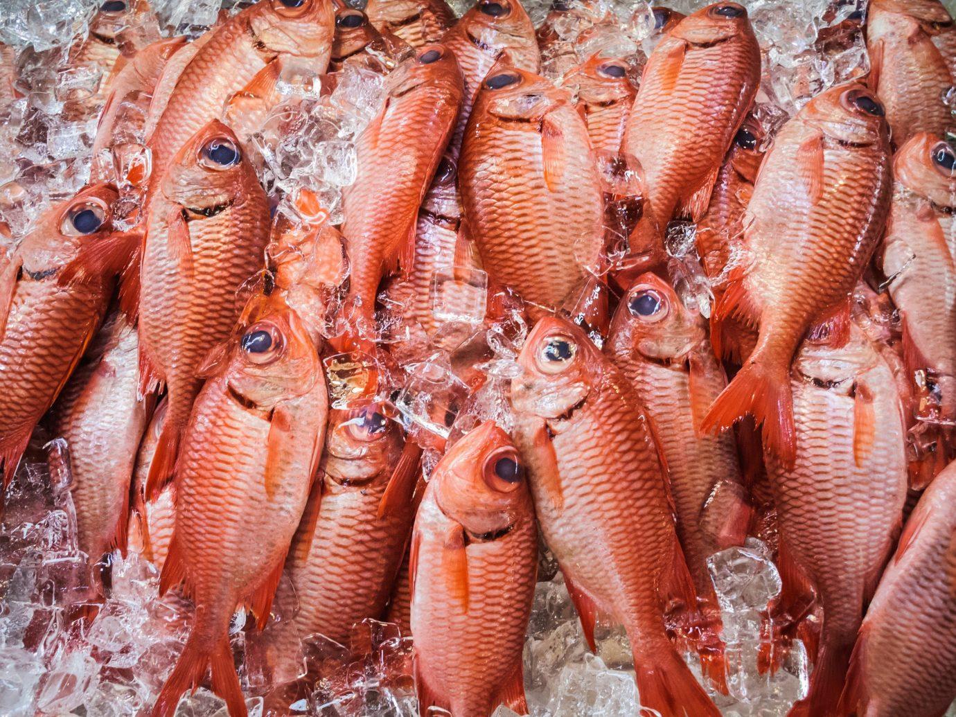 Food + Drink animal marine biology food Seafood invertebrate red snapper animal source foods snapper fish
