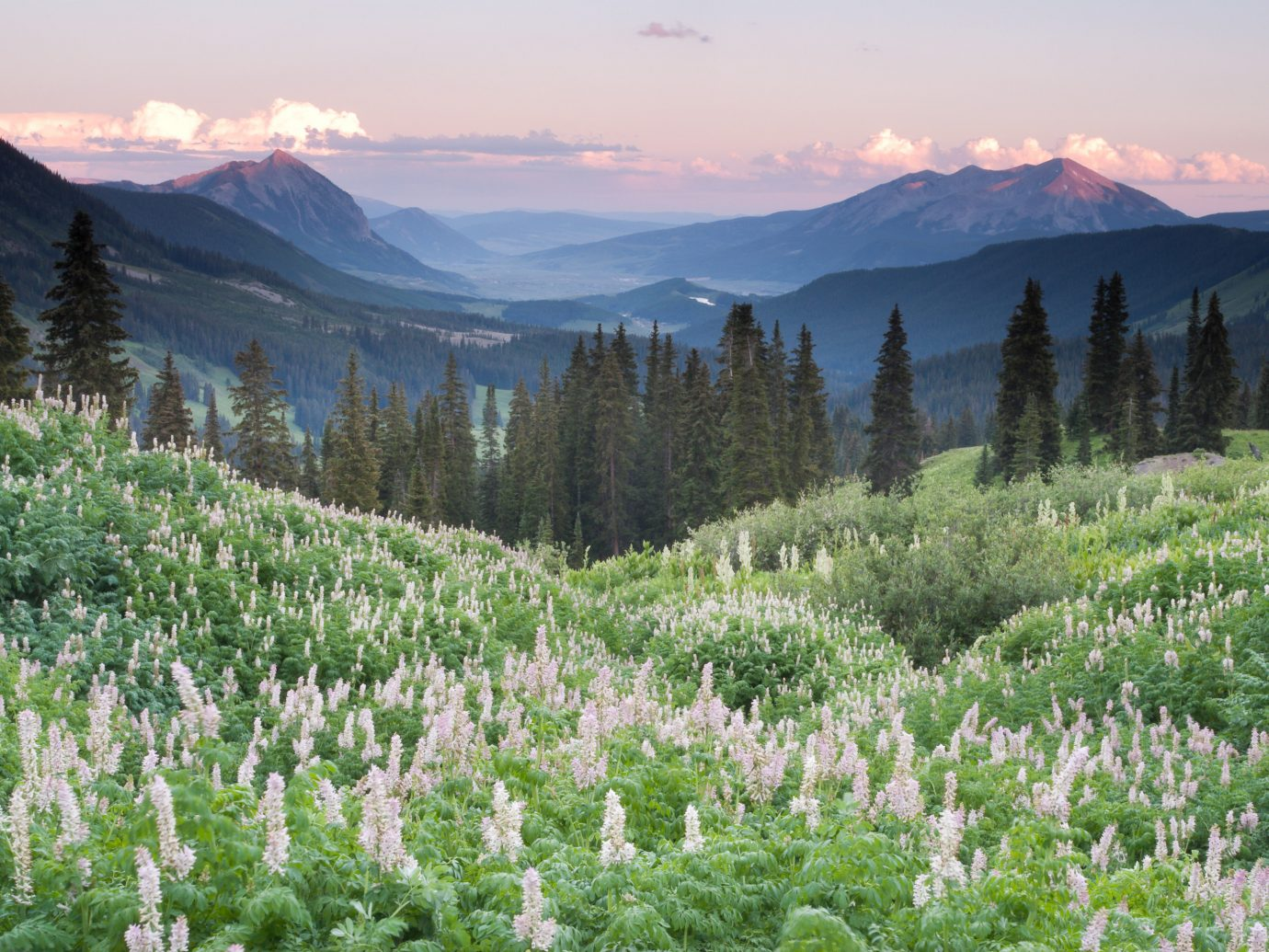 Trip Ideas sky mountain outdoor tree mountainous landforms wilderness mountain range geographical feature flower ecosystem plant field background meadow valley Nature wildflower landscape alps plateau ridge Lake pasture distance surrounded lush highland