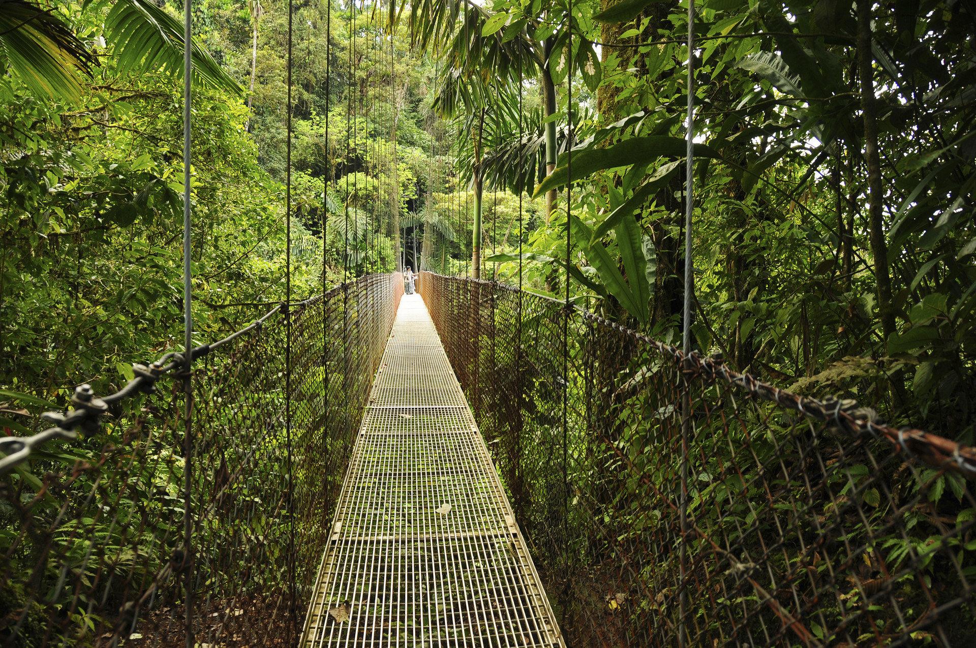 Adventure Trip Ideas tree bridge building habitat outdoor Nature natural environment green Forest rainforest botany Jungle woodland sunlight leaf Garden canopy walkway plant wood wooded