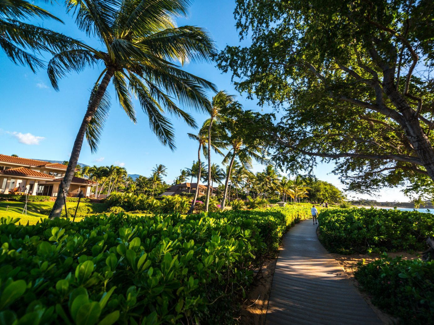 Beach tree outdoor sky plant green palm botany flower arecales woody plant leaf River plantation palm family estate rural area Garden agriculture sunlight walkway tropics Resort park bushes surrounded lined