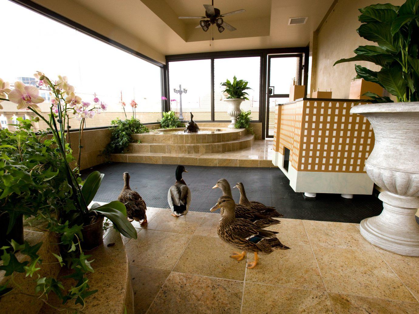 Elegant Lobby Luxury Modern Offbeat indoor home plant estate backyard furniture