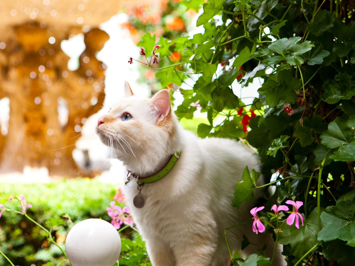 Offbeat tree flower cat mammal plant outdoor Garden white domestic cat